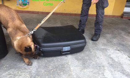 Sequestrati 5 kg di eroina, merito dei cani Caymon e Haila. FOTO