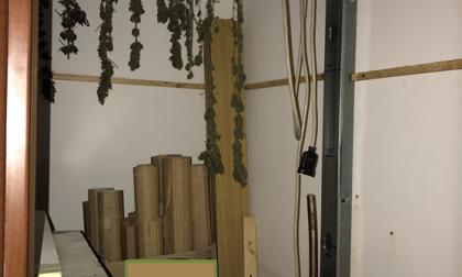 Arresto per droga in piazza Garibaldi: in casa aveva una serra