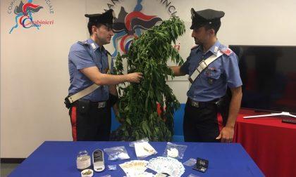 Blitz dei Carabinieri con i cani antidroga: arrestati due 60enni