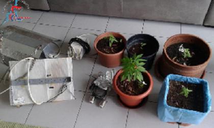 Lipomo, coltivava marijuana sul balcone di casa