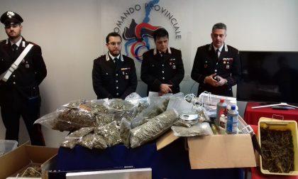 Rovello Porro arrestati: coltivavano marijuana