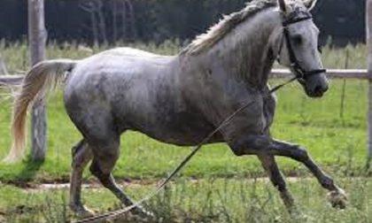Inciampa e il cavallo la travolge, trasportata d'urgenza al Sant'Anna