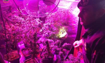 Coltivava marijuana piante anche nel salotto di casa