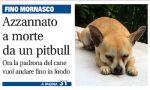 Chihuahua azzannato a morte: c'è l'ordinanza per contenere il pitbull