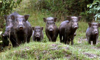 Il bilancio 2019 degli agricoltori lariani? Clima pazzo e allarme animali selvatici