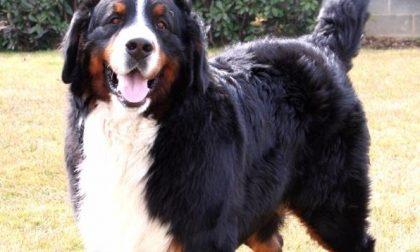 Cane senza guinzaglio morde pensionato padroni condannati
