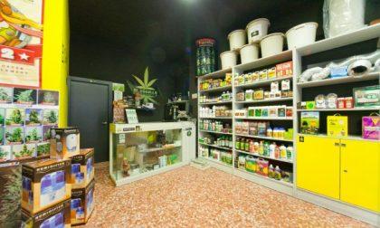 Negozi cannabis boom in Lombardia: a Como un growshop