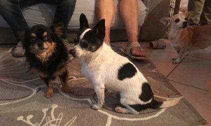 Famiglia di Binago ritrova il cane dopo 4 anni: Pepe è tornato a casa