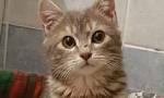 Noel, la gatta trovata in un tombino a Natale sta molto male