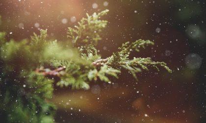 """""""Chiama gli alberi per nome"""", l'evento per sostenere gli studenti del Pessina nel progetto """"Questo Mostro Amore"""""""