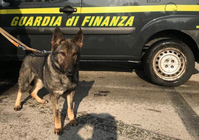 Sequestrata cocaina su un Flixbus a Brogeda grazie alla segnalazione di Gaby FOTO E VIDEO