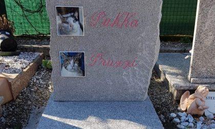 San Valentino, il regalo è una tomba per le amate gatte