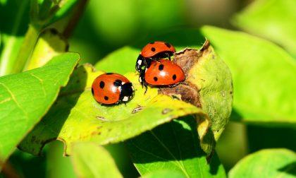 Biodiversità in natura venerdì serata a Novedrate