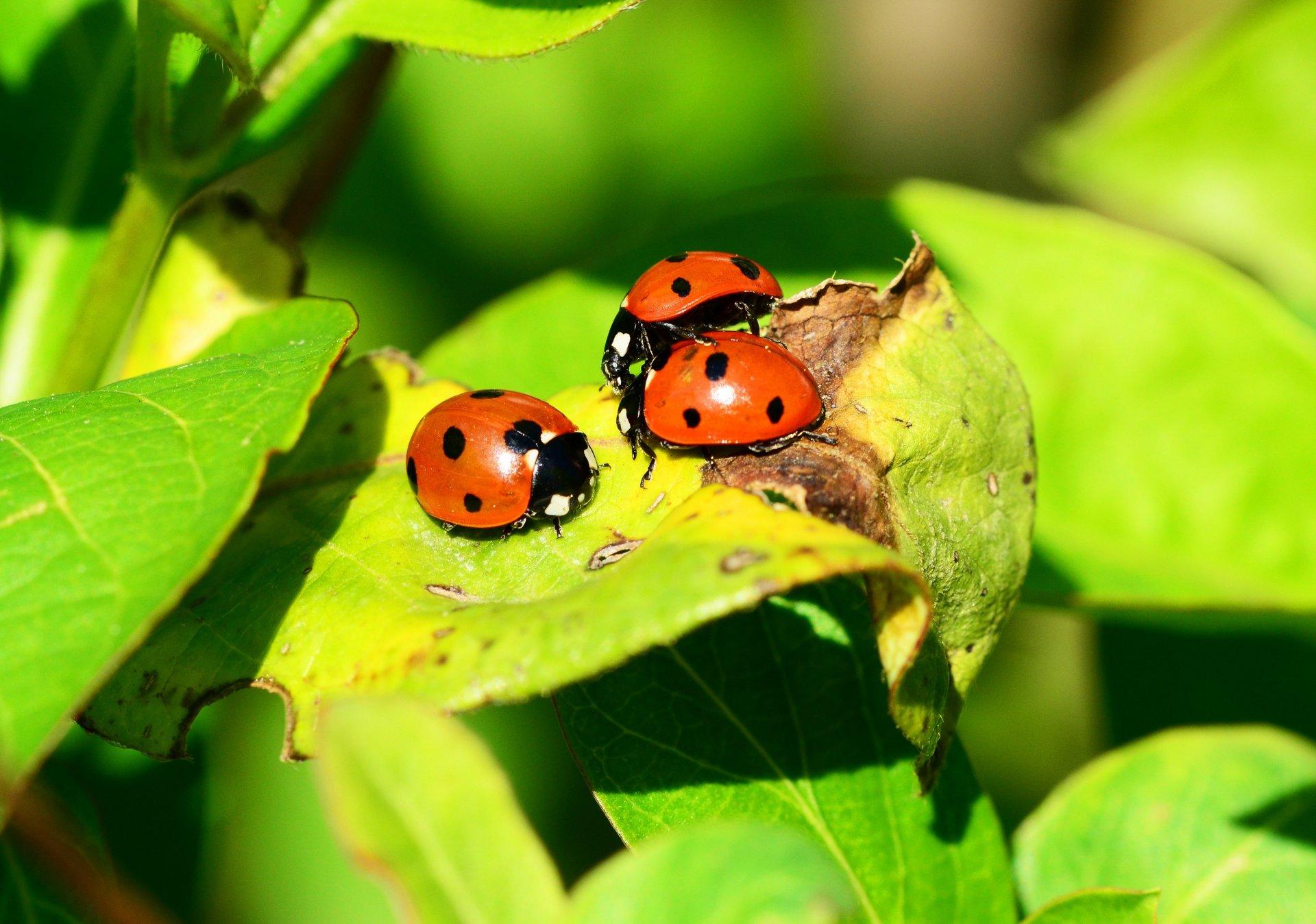 Biodiversità in natura venerdì serata a Novedrate - Giornale di Como - Giornale di Como