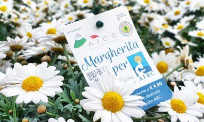 Margherita per Airc: l'iniziativa benefica al via il 6 marzo