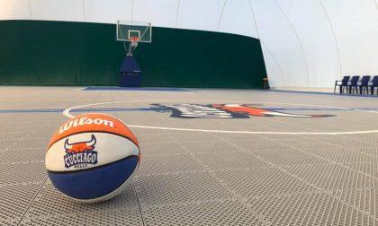 Basket lariano i Cucciago Bulls pronti per i campionati lombardi 2020/21