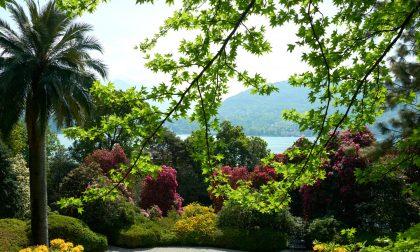 Dal Cedro del Libano alla Palma di Guadalupe: Villa Carlotta risorge dalle sue piante (da adottare)
