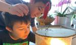 Nonno e nipotino fanno nascere i pulcini in una campana di vetro