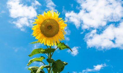 Nel fine settimana il tempo dovrebbe migliorare   Previsioni meteo