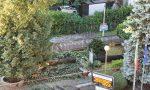 Maltempo a Cabiate albero cade e colpisce un palo dell'alta tensione FOTO