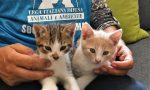 Abbandona due gattini a Carimate, beccato dalle telecamere: la denuncia di Leidaa