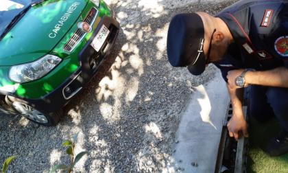 Scoperto uno scarico abusivo all'interno del Parco della Spina Verde FOTO
