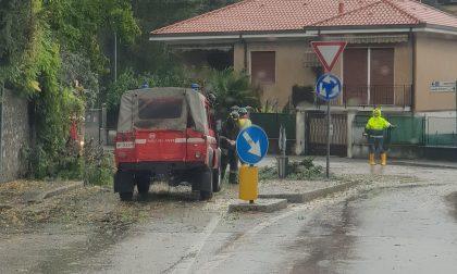 Maltempo, albero caduto a Erba