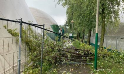 A Figino cade una pianta nel Centro sportivo comunale FOTO
