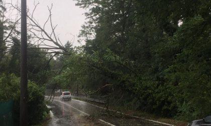 """Maltempo e alberi caduti a Olgiate. La minoranza attacca: """"Scarsa manutenzione"""""""