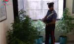 Coltivava piante di marijuana in casa: un arresto e una denuncia