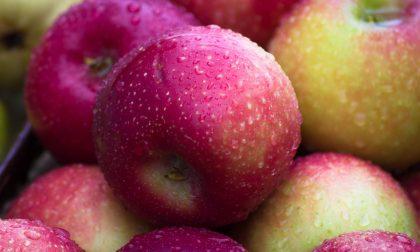 "Croce Rossa di Lurate Caccivio, torna l'iniziativa ""Una mela vale di più"""