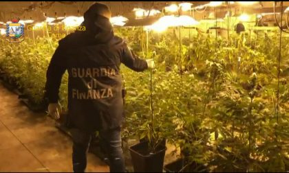Sequestrate 500 piante di marijuana all'interno di un capannone FOTO e VIDEO