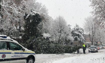 Neve nell'Olgiatese disagi agli ingressi delle scuole. Albero caduto a San Fermo FOTO
