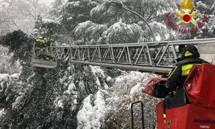 Neve e disagi: pompieri in azione per tagliare le piante e autocarri in difficoltà sulla Novedratese