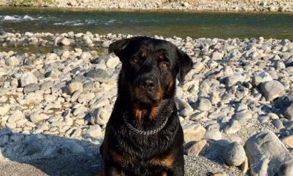 Sei cani folgorati dalla corrente tramite tombini: scattano le denunce contro i sindaci