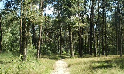 Due posti per il servizio civile al Parco delle Groane: ecco come candidarsi