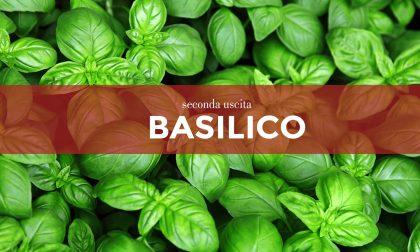 Tutti ortisti: in edicola con i nostri settimanali i semi di basilico