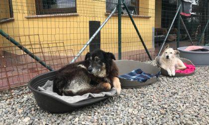 Dopo l'incendio grande solidarietà per il canile di Olgiate: arrivati tanti aiuti per i cani