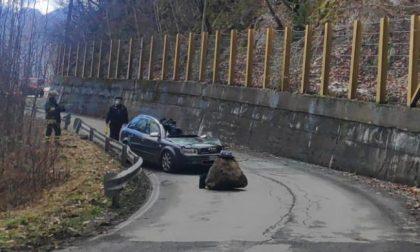 Tragedia in Valtellina: muore nell'auto schiacciata da un masso