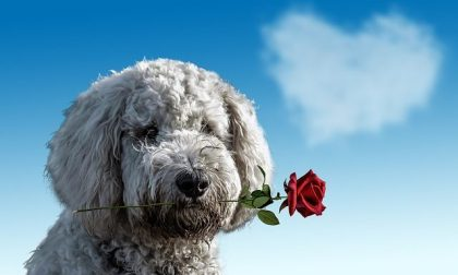 """San Valentino, tutti i modi per dirsi """"Ti amo"""""""