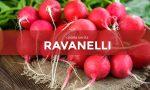 In regalo con il Giornale di Cantù, Erba e Olgiate i semi di ravanello