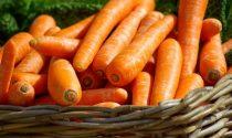 In regalo con il Giornale di Cantù, Erba e Olgiate i semi di carota