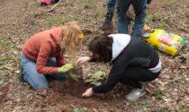 Un bosco della speranza in dono alla comunità