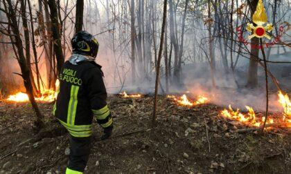Incendio a Caccivio, mille metri quadrati di vegetazione distrutta