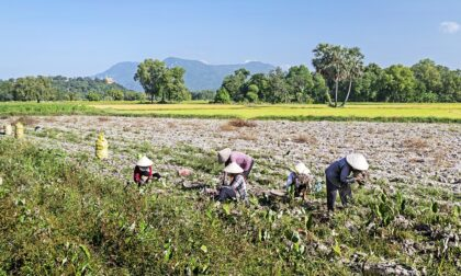 """Lavoratori agricoli comaschi in protesta: """"Zero sostegni e zero diritti"""""""