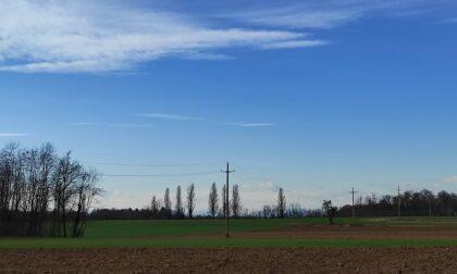 Prati da fieno inquinati e coltivazioni calpestate: monito del Comune di Olgiate a chi passeggia coi cani