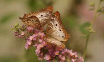 Seminiamo fiori, raccogliamo farfalle: l'incredibile progetto dei bimbi di Erba
