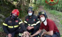 Un cane si perde nel bosco, recuperato dai Vigili del fuoco