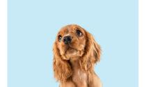 Quanto costa vaccinare un cane e quali sono i vaccini obbligatori