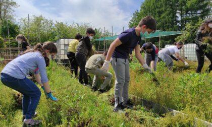 Gli orti di Rebbio, oasi di pace per i bambini della primaria tra insalate da piantare e erbacce da strappare